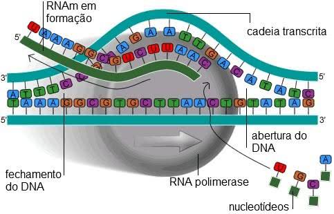 DNA, RNA e Código Genético