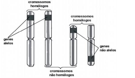 Genética - Revisão Biologia Enem 2