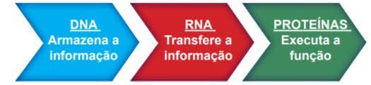 Genética - Revisão Biologia Enem 1
